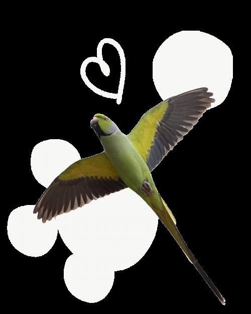 uccelli_alimentazione